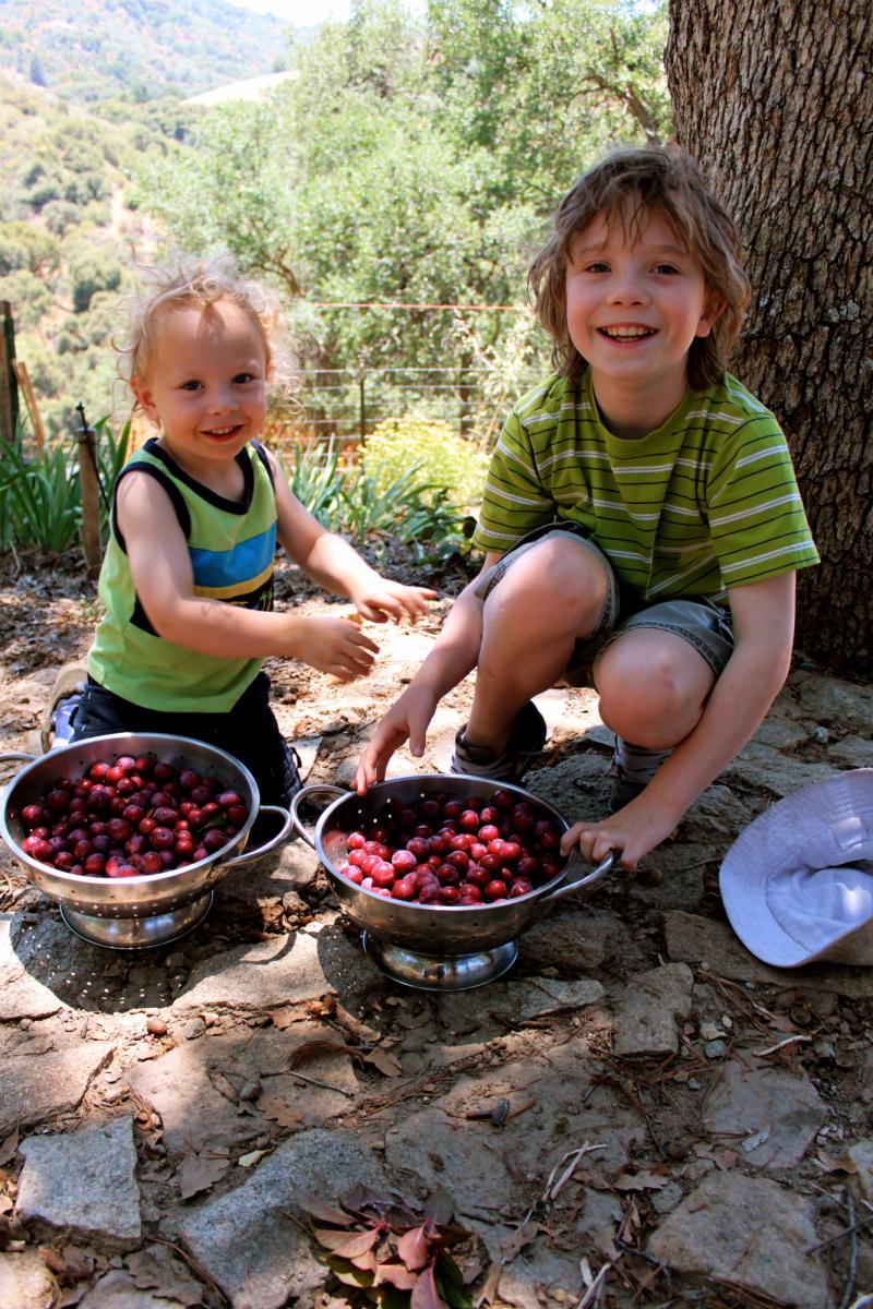 Wild Plum Harvest and Jam-Making