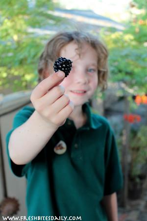 Blackberry Harvest at FreshBitesDaily.com