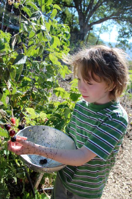 Blackberries Everywhere, Jam Time