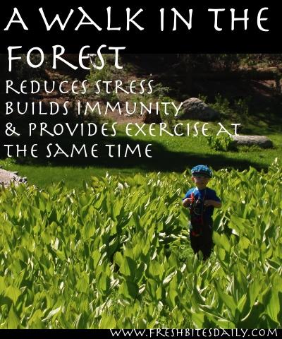 Forest Walks Build Immunity from FreshBitesDaily.com