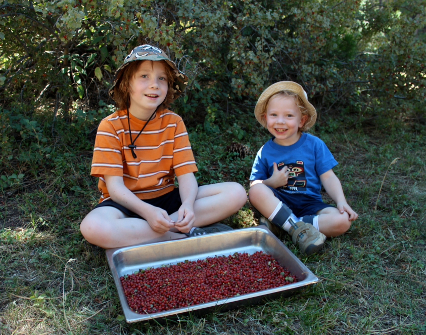 Wild Currant Harvest: Don't Drop The Berries!