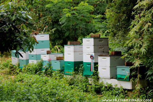 Steelgrass Honey via FreshBitesDaily.com