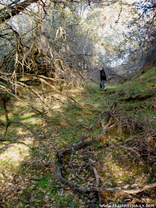 """The """"Lost Road Chronicles"""" -- Foraging, Fun, and Downright Mysterious Stuff"""