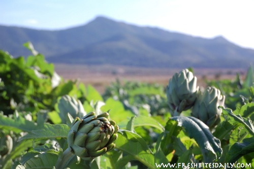 Seven strange-growing foods you will want to see -- Artichoke