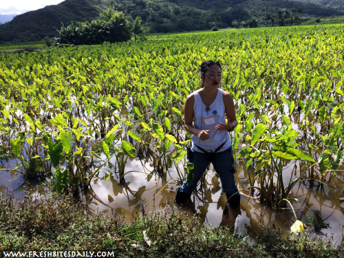 Seven strange-growing foods you will want to see -- Taro