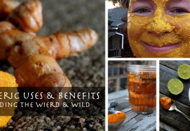 Turmeric Benefits, Uses – The weird and the wild!