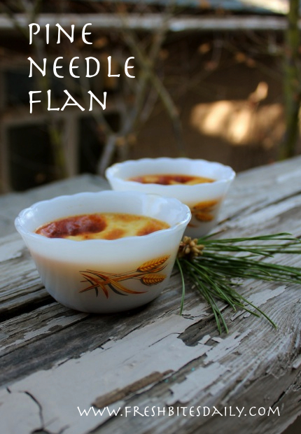 "Pine needle flan and other recipes from our adventures on ""The Lost Road"""