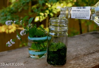 Homemade mint/peppermint extract: You're making it all wrong! Two key tips you probably do not know