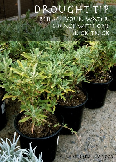 Reduce your water usage in your garden pots and beds with this one slick trick