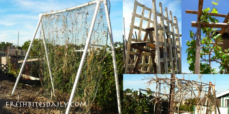 Garden trellis ideas for climbing vines
