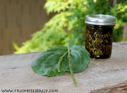 A poultice for hikers and gardeners to fight bites, swelling, itch, and redness