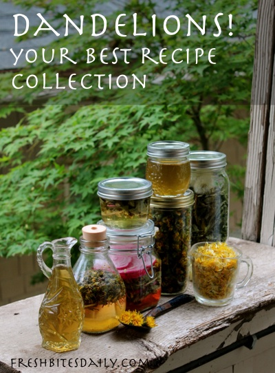 Dandelion recipes! Your best recipe collection