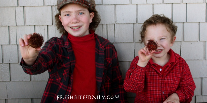 "Kids face rambutan — ""hairy fruit""!"